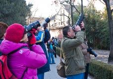 Actividades de grupo de los entusiastas de la fotografía de Pekín Imagen de archivo libre de regalías