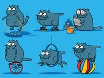 Actividades del gato Fotos de archivo libres de regalías