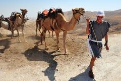 Actividades del paseo y del desierto del camello en el desierto Israel de Judean Fotos de archivo libres de regalías