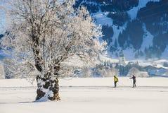 Actividades y árbol del invierno de Tannheim Austria con nieve Fotografía de archivo libre de regalías