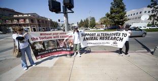 Activista del derecho de los animales en la protesta del UCLA Foto de archivo
