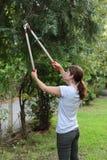 Activité de jardinage Images libres de droits