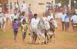 Activité récréationnelle traditionnelle de sport à Jaffna photos stock