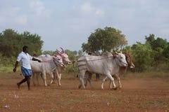 Activité récréationnelle traditionnelle de sport à Jaffna image stock