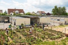 Activités de jardinage dans un camp de réfugié allemand Photographie stock libre de droits