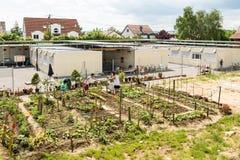 Activités de jardinage dans un camp de réfugié allemand Photographie stock
