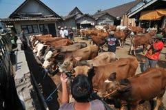 Activiteit bij traditionele koemarkt tijdens de voorbereiding van Eid al-Adha in Indonesië Royalty-vrije Stock Foto