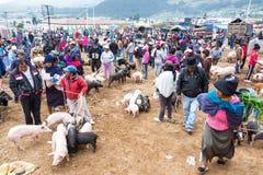 Activiteit van de Otavalo de Dierlijke Markt Royalty-vrije Stock Foto