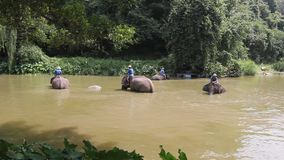 Activities elephant bath like an elephant bath for cooling, Is a tourist destination in northern Thailand stock video footage