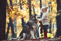 Activity and active rest. Red riding hood with wolf in fairy tale woods. Childhood, game and fun. Child play with husky royalty free stock photos