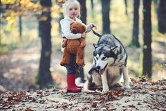 Free Activity And Active Rest. Child Play With Husky And Teddy Bear On Fresh Air Outdoor. Little Girl With Dog In Autumn Stock Image - 143159981