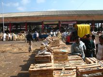 Activity in the fruit market during mango season Royalty Free Stock Images