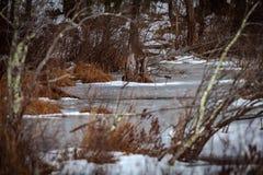 Acton, Vereinigte Staaten, am 27. Februar 2019 Grasartiges Teich-Naturschutzgebiet oder rohe Natur in der Winterzeit, Massachuset lizenzfreies stockbild