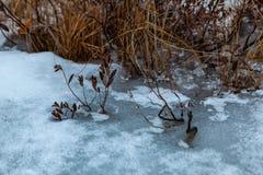 Acton, Vereinigte Staaten, am 27. Februar 2019 Grasartiges Teich-Naturschutzgebiet oder rohe Natur in der Winterzeit, Massachuset stockfoto
