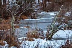 Acton, Vereinigte Staaten, am 27. Februar 2019 Grasartiges Teich-Naturschutzgebiet oder rohe Natur in der Winterzeit, Massachuset stockfotografie