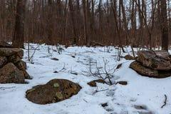 Acton, Vereinigte Staaten, am 27. Februar 2019 Wildes Holz unter der Show während der Winterzeit im grasartigen Teich-Naturschutz lizenzfreie stockfotos