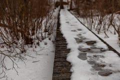 Acton, Vereinigte Staaten, am 27. Februar 2019 Wildes Holz unter der Show während der Winterzeit im grasartigen Teich-Naturschutz lizenzfreie stockbilder