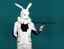 Actor posing in white rabbit suit with tray on Royalty Free Stock Photography