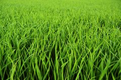 Green grass, spring time stock photography