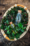 Acuñe el aceite y la esencia fragante en pequeñas botellas con la hierbabuena l imagenes de archivo