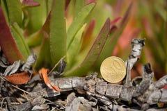 Acuñe el euro del centavo en las plantas verdes del fondo, copie el espacio Imágenes de archivo libres de regalías