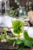 Acuñe el té en un vidrio, hierba en una tabla de madera Fotografía de archivo libre de regalías