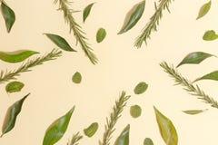 Acuñe las hojas, el mandarín y el romero en un fondo amarillo Visión superior foto de archivo libre de regalías