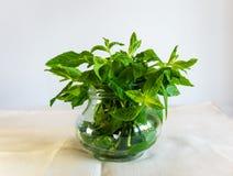 Acu?e las hojas de la hierbabuena en una taza de cristal en el fondo blanco Hierbas, cócteles, médicos imagen de archivo