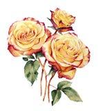 Acuarela con tres rosas amarillo-rosadas Fotografía de archivo