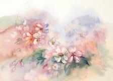 Acuarela de la floración de Sakura Foto de archivo libre de regalías
