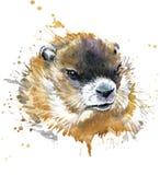 Acuarela de la marmota Imagen de archivo libre de regalías