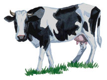 Acuarela de la vaca Foto de archivo libre de regalías