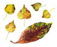 Acuarela de las hojas de otoño Imagen de archivo