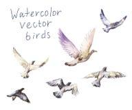 Acuarela de las palomas Imagen de archivo
