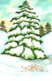 Acuarela del árbol de pino Imágenes de archivo libres de regalías