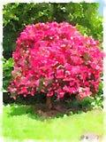 Acuarela del árbol rosado de la magnolia en un parque stock de ilustración