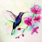 Acuarela del colibrí Fotos de archivo