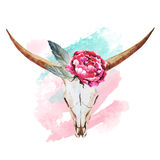 Acuarela del cráneo de Bull ilustración del vector