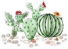 Acuarela del ejemplo de los succulents del cactus stock de ilustración