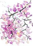 Acuarela del extracto de la ramita de la flor y pintura rosadas de la tinta stock de ilustración