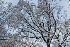 Acuarela del invierno Imágenes de archivo libres de regalías