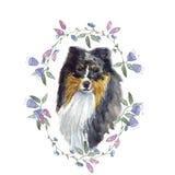 Acuarela del perro pastor de Shetland Imágenes de archivo libres de regalías