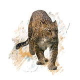 Acuarela del retrato del leopardo libre illustration