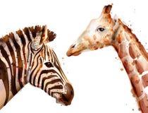 Acuarela del vector de la cebra y de la jirafa Animales del safari de la fauna ilustración del vector