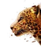 Acuarela del vector del leopardo cartel detallado colorido de la fauna del ejemplo stock de ilustración