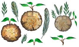 Acuarela fijada con la sección de la rebanada del árbol, de hojas, de plumas y de la rama ilustración del vector