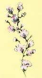 Acuarela floral abstracta Foto de archivo