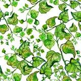 Acuarela inconsútil con las ramas y las hojas Fotografía de archivo
