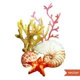 Acuarela, mar, coral, cáscara stock de ilustración