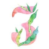 Acuarela número 3, estilo floral, stylization de la peonía, aislado en blanco Imagen de archivo libre de regalías